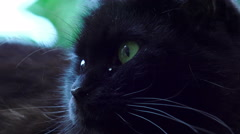 Black cat with green eyes Stock Footage