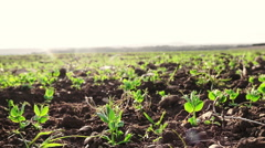 Hand Caressing a sprouting up plant: agriculture, green, Expo, Italy, growing  Stock Footage