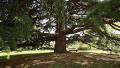 Immense fairytale tree and bench under it. Italy Stock Footage
