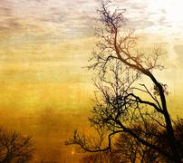 Vintage bare trees in sunset - stock illustration
