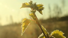 Return spring cold weather: frost on green leaf Stock Footage