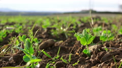 Growing plant: agriculture, food, green, natural style Stock Footage