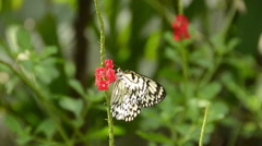 Exotic butterfly Stock Footage