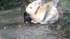 Rabbit, dwarf bunny, outside, easter Stock Footage