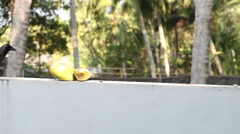 Crow sit near coconut Stock Footage