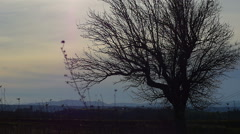 Sunset in the countryside: silhouette of a tree when the night comes over fields Stock Footage