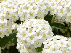 Flowers and summer. Related clips are in my portfolio in 1920x1080. - stock footage
