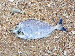 Dead fish on the shore. ecological disaster Stock Photos