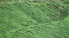 Tea farm at morning breakfast, fresh air and windy surrounding Stock Footage
