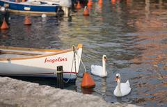 Two swans and the boat Stock Photos