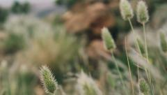 Dolly detail shot of gras in beautiful landscape, slow motion Stock Footage