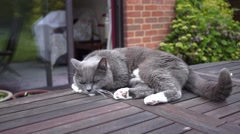 Cat on Garden Table Stock Footage