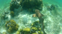 Nurse shark - stock footage