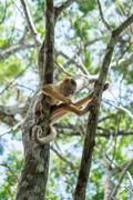 Small Monkey on tree in Amazon Forest Stock Photos