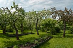 Stock Photo of apple trees garden in spring time. nobody