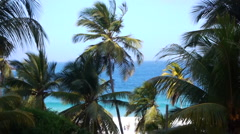 Palms and Sea in Venezuela Stock Footage