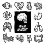 Anatomy Icons Set - stock illustration