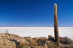 cactus by slat planes - stock photo