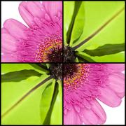 square collage of fern and gerbera - stock photo