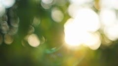 Beautiful out of focus sunset. Sun shine through blowing on wind tree leaves Stock Footage