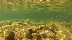 Underwater Light Reflection Stock Footage