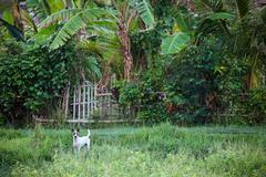 Dog guarding home Stock Photos