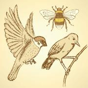 Stock Illustration of sketch birds and bee in vintage style