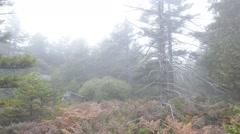 Foggy Mountain in Autumn Stock Footage