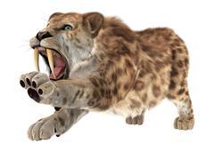 big cat smilodon - stock illustration