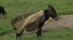 Donkey Follows Owner Stock Footage