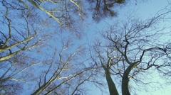 Morning synlight iluminated huge trees-fart motion - stock footage