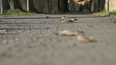 Rolling dry leaves on the path in slow motion Stock Footage