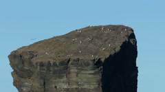 Many Seagull Sitting on Top High Rock Stock Footage