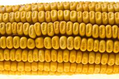 corn corncob - stock photo