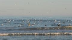 4K, Birds hunting, CB 210000001 06 Stock Footage