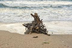 Snag on the sea shore Stock Photos