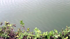 Medium Close-up of Ripples in water Stock Footage