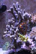 View of a coral aquarium Stock Photos