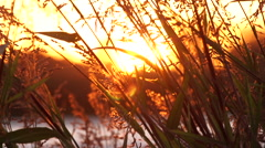 Tall Grass at Sunset on the Delta Waters Stock Footage