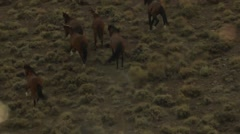 Very good aerial of wild horses running against sunset. - stock footage