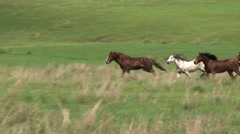 Wild horses running. Stock Footage