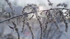 CLOSE UP: Sun shining through frozen flower in winter Stock Footage