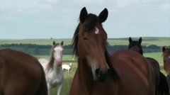 Wild horses enjoy long term pasture in the spring. - stock footage