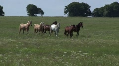 Wild horses enjoy long term pasture in the spring. Stock Footage