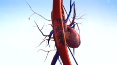 Artery shown with a cut out section Stock Footage