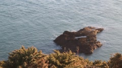 Bush with thorns is waving in the wind on a cliff, sea and island in background Stock Footage