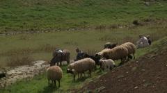 Herding By Peasants - stock footage