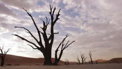 Dolly move reveals the Dead Vlei of Namibia, Floor detail to establishing shot Stock Footage