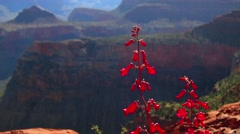 Wildflowers grow in the American Southwest. - stock footage