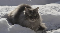 CLOSE UP: Cat lying in the fresh snow Stock Footage